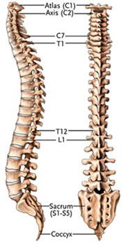 spine-2-11